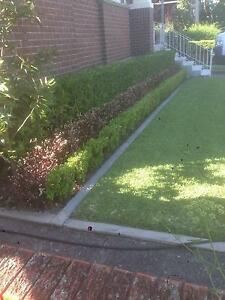 Trimscape - Lawn & Garden Care Gladesville Ryde Area Preview