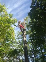 Affordable Tree Trimming and Removal