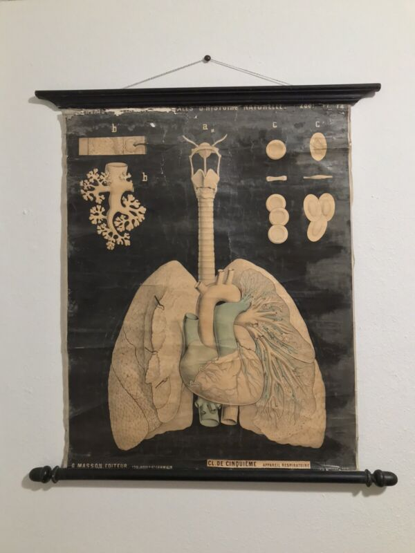 Rare G. Masson P. Gervais Antique Anatomy Chart 1883 French Respiratory Lungs