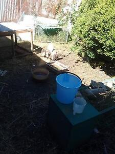 gummybearoldy Mount Barker Mount Barker Area Preview
