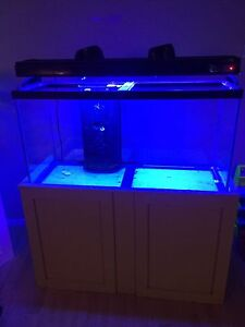 Fish Tank if gone today $300 firm