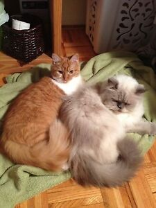 Two lovable cats