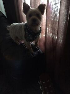 Looking for a smaller to med size  dog for my retired mother.