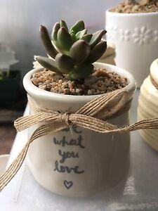 Succulents in ceramic pots South Hurstville Kogarah Area Preview