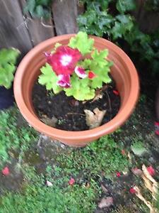 Plants in pots Cranbourne Casey Area Preview
