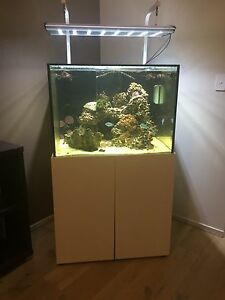 Marine Aquarium Tank - 80 x 60 x 60cm. All offers considered. Lonsdale Morphett Vale Area Preview
