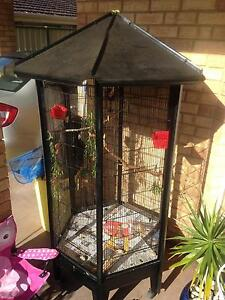 Rainbow lorikeets and large patio cage Mount Nasura Armadale Area Preview