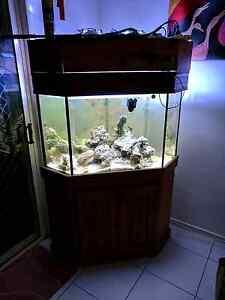 Salt Water Corner Aquarium Tank Eagleby Logan Area Preview