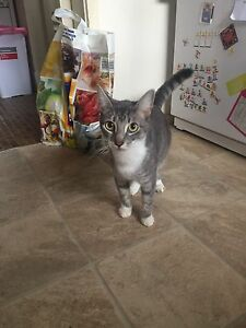 2x 2 year old female cats Tregear Blacktown Area Preview