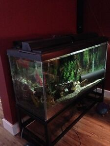 90 gallon tank, custom stand, and fish