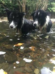 FREE TO THE PERFECT HOME & PROPERTY - TWO BORDER COLLIES
