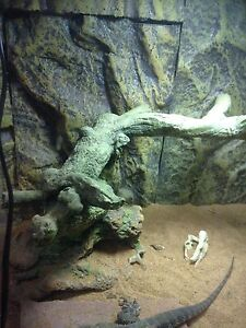 75 g tank w/ stand & dragon. Everything you need London Ontario image 7