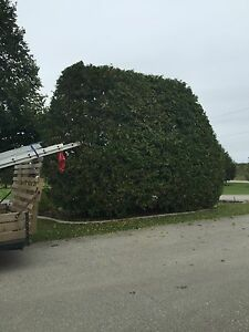 Tree removal services  London Ontario image 7
