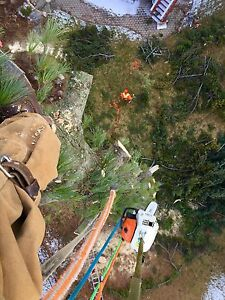 Tree removal services  London Ontario image 2
