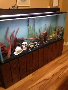 100 Gallon Fish Aquarium