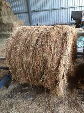 Cow hay lucerne round bales Glendon Singleton Area Preview