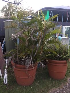 Huge outdoor pot with ferns/palms