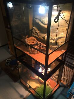 Bearded Dragon Enclosure FULL SETUP