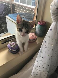 Kittens needing forever loving homes