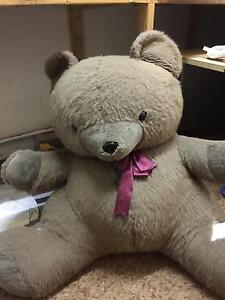 HUGE TEDDY BEAR Mount Gambier Grant Area Preview