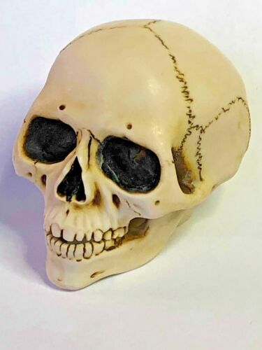 Harmony Kingdom Ar Neil Eyre Designs gothic human bone skull head jaw sculpture