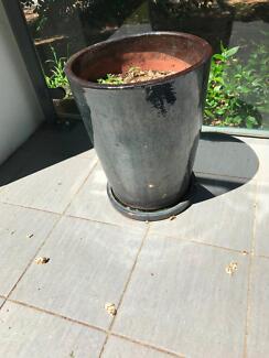 Garden Pots Canberra Glazed garden pot pots garden beds gumtree australia woden garden pots workwithnaturefo