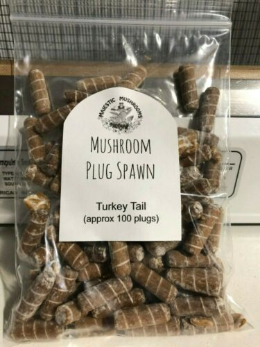 Turkey Tail Mushroom Plug Spawn 100x - FREE USA shipping