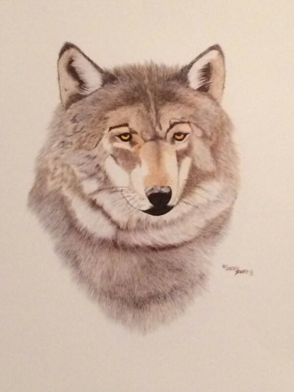 """Western Art / Wildlife-Wolves """"Grey Wolf"""" color print by artist Larry Bees"""