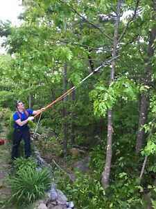 Tree Removal/Trimming/pruning and yard cleanup