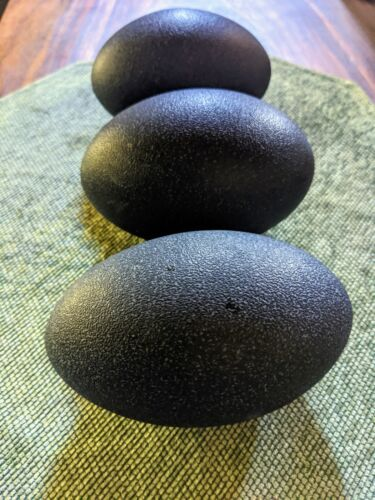3 EMU EGGs, Clean, Hollow, Small holes drilled, For Crafts or Display