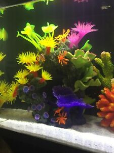Décoration d'aquarium
