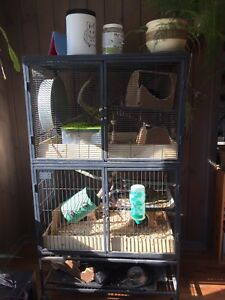 Proven Breeding Pair of Chinchillas and Cage