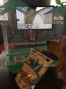 Almost new parakeet cage with bird included!