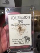 SALE! AUTHENTIC Preserved Mammoth hair in Display Case Riverwood Canterbury Area Preview