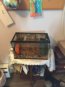 5.9 gallon fish tank