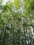 Bamboo House and Garden