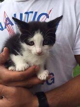 Free Kittens!!! Fairfield Fairfield Area Preview