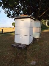 Beehives - 8 frame $350/hive Bolwarra Maitland Area Preview
