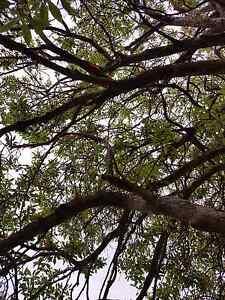 Outdoor Mindfulness Training in Melbourne Thornbury Darebin Area Preview