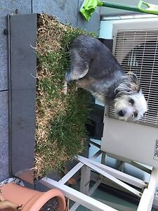 Dog  toilet all stainless steel real grass Docklands Melbourne City Preview