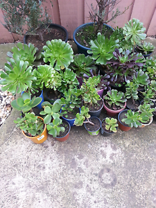 Mix garden plants in pot from $5 Roxburgh Park Hume Area Preview