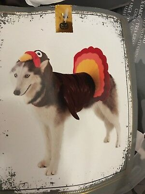 Thanksgiving Costumes For Dogs (SPOOKY NIGHT Halloween-Thanksgiving