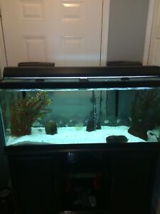 75 gallon tank and stand $300 obo