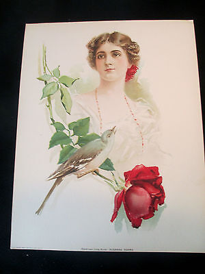 "1903 HAND COLORED LITHO CALENDAR TOP AMERICAN SONG BIRDS SUZANNE ADAMS 10 X 13"""