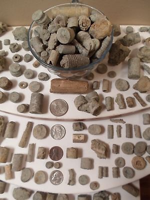CRINOID 1 LB GREAT VARIETY Ancient Animal Remain Fossil COLLECT DISCOVER EXPLORE