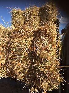 Quality Hay Oaten - Oaten/Balansa - Grass/Clover Skipton Pyrenees Area Preview