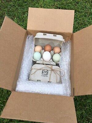 8 Pack Fertile Chicken Hatching Eggs Free Range Barnyard Mix