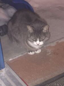 Found cat in Bowness