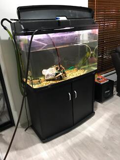 980T AquaStyle 240L Curved Glass Aquarium Inc Cabinet