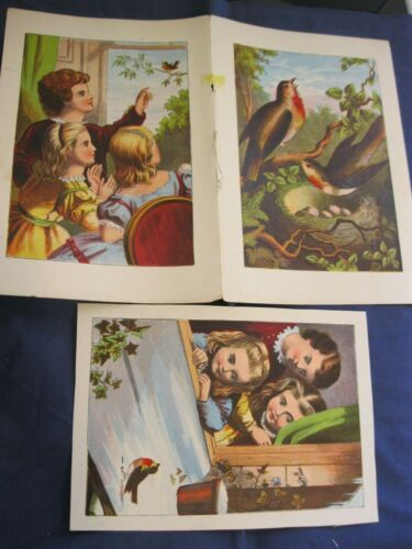 Victorian Trade Card BEAUTIFUL Book Pages Children Robin COLORFUL   4A